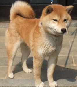 kikyo1 (2)